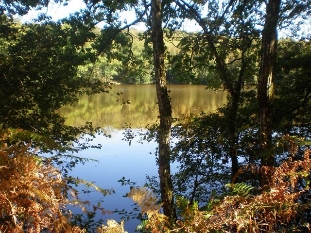 L'étang de Tricherie à Thouron