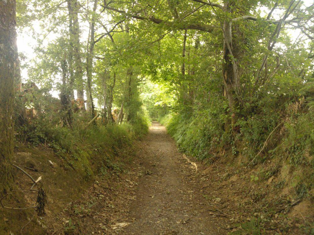 Aux abords de la vallée de l'Aurence
